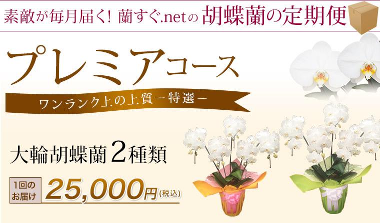 大輪胡蝶蘭2種類 プレミアコース