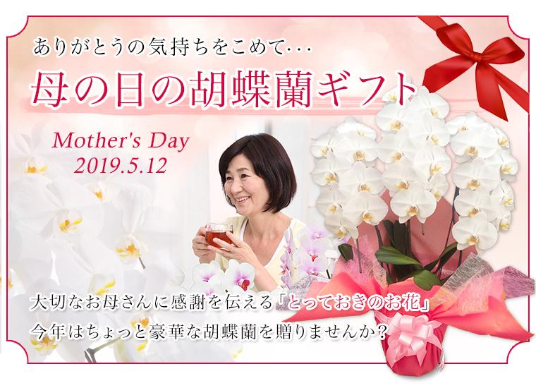 母の日の胡蝶蘭ギフト