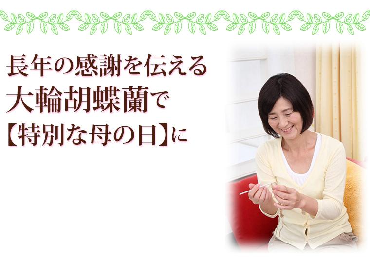 長年の感謝を伝える大輪胡蝶蘭で特別な母の日に