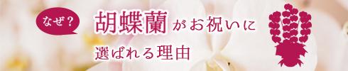 胡蝶蘭を贈る理由